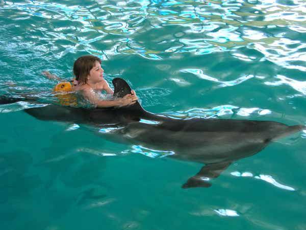 Дельфинотерапия и её лечебные факторы. Лечение в Крыму.