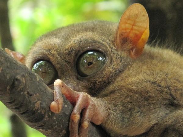 Эти глаза напротив. Экзотические животные.