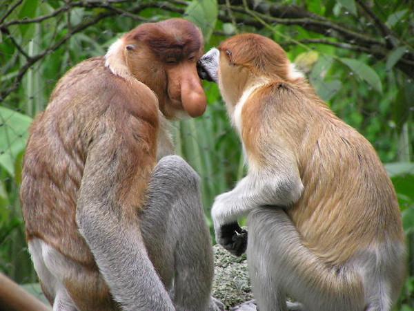 Добро пожаловать на Борнео! Экзотические животные.