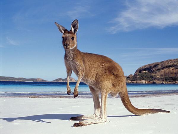 Австралия — описание. Австралия.