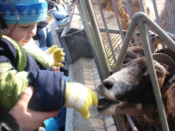 Одесский зоопарк. Города Украины.