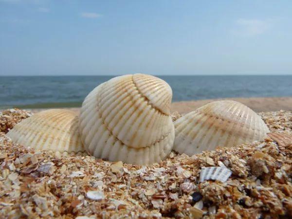 Отдых на Азовском море. Ейск.