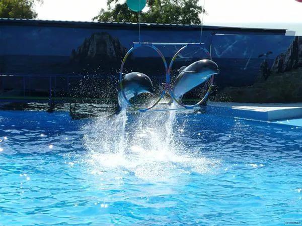 Дельфинарий города Ейска. Ейск.
