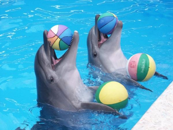 Дельфинарий Ейска. Ейск.