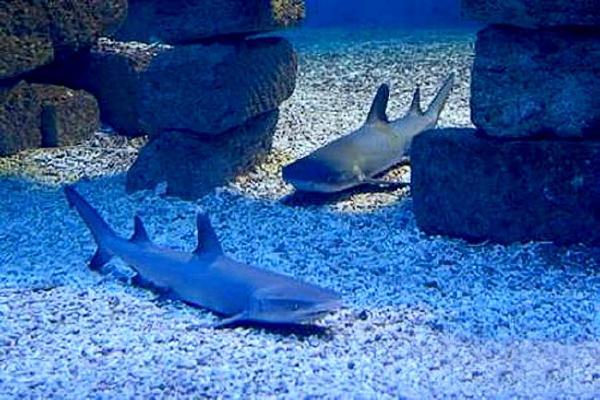Отдых в Ейске – океанариум «Акулий риф». Ейск.