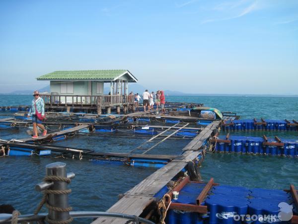 Остров Ко Самуи. Таиланд. Тайланд.