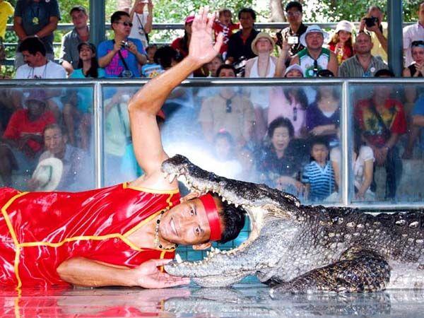 Тайланд Паттайя — экскурсии и отзывы. Таиланд