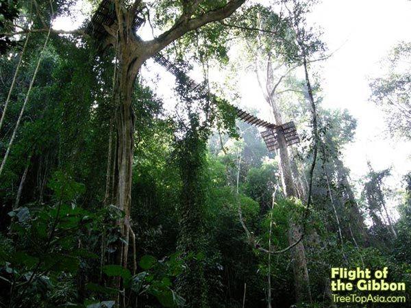 Стоит ли посетить Полет гиббона в Паттайе и на Пхукете. Таиланд