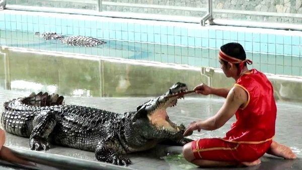 Крокодиловая ферма. Таиланд